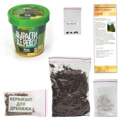 """Набор для выращивания растений ВЫРАСТИ ДЕРЕВО! """"Кедр Сибирский"""" (банка, грунт, семена)"""