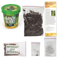 """Набор для выращивания растений ВЫРАСТИ ДЕРЕВО! """"Пихта Вича"""" (банка, грунт, семена)"""