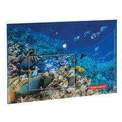 """Папка-конверт с кнопкой BRAUBERG """"SEA WORLD"""", А4, 160 мкм, до 100 листов, цветная печать, 228041"""